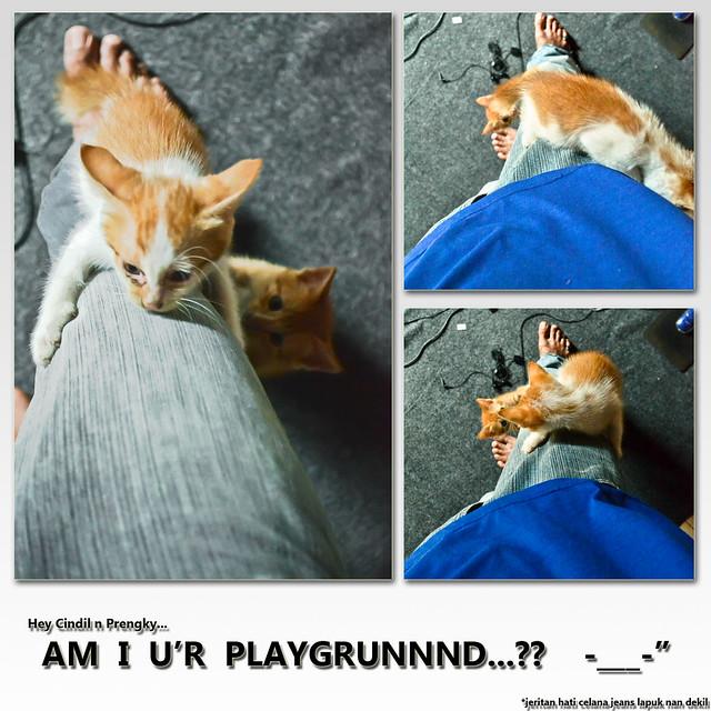 Kucing Lokal Jantan Jual Kucing Persia Mix Bonus Kucing