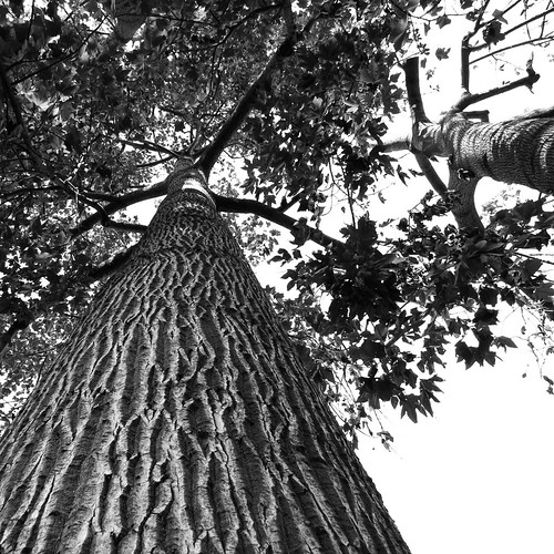 Tree from below