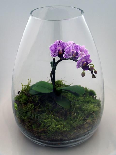 Orchid Terrarium Flickr Photo Sharing