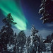Lapland night