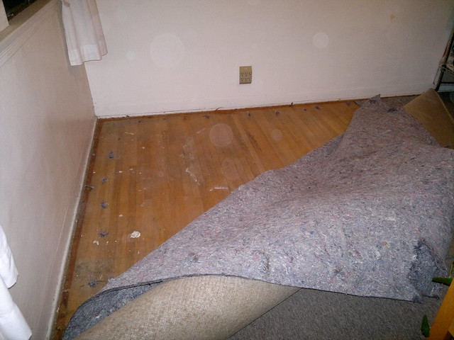The apartment carpet pad and wood floor have a case of for Wood floor under carpet