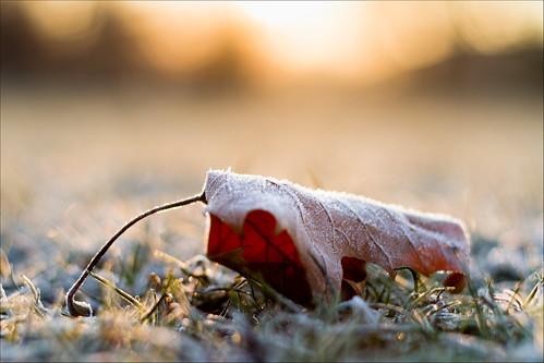 winter cold sunrise 50mm leaf bokeh frosty goldenglow hbw