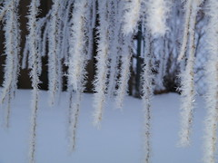 winter, snow, ice, frost, freezing, twig,