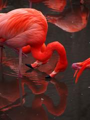 Higashiyama Zoo & Botanical Gardens