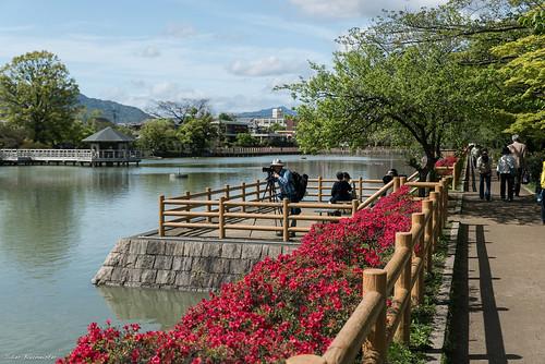 fleur sanctuaire nagaokatenjin azalée kinsuitei japonprintemps2016