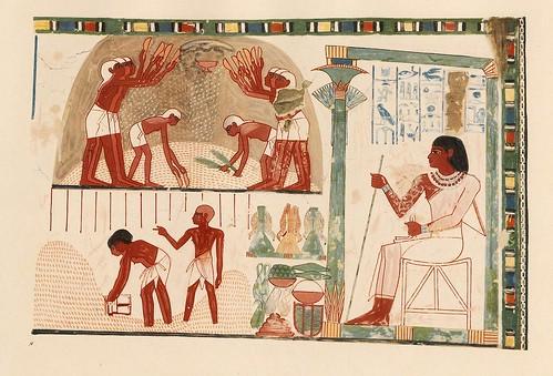 017-Naak desde su puesto ve a las jovenes aventar el trigo- The tomb of Nakht at Thebes  1917- Norman de Garis Davies- © Universitätsbibliothek Heidelberg