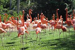 20111127_Busch Gardens_305