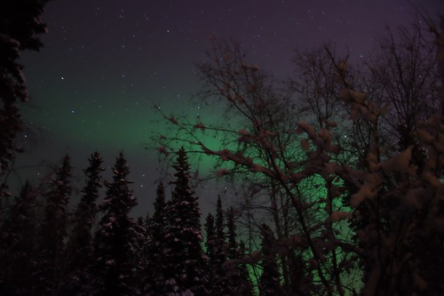 diffuse aurora through the trees