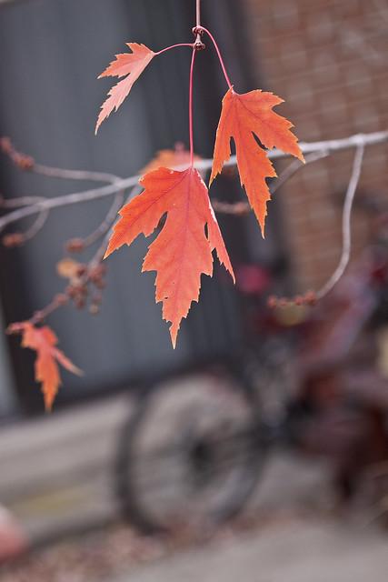 leafbike2