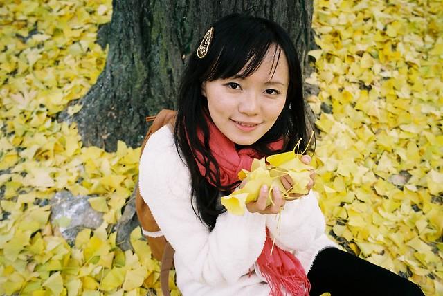 黃澄澄的銀杏葉