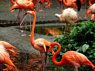 Visit the colorful world  of Jurong Bird Park - Things to do in Singapore