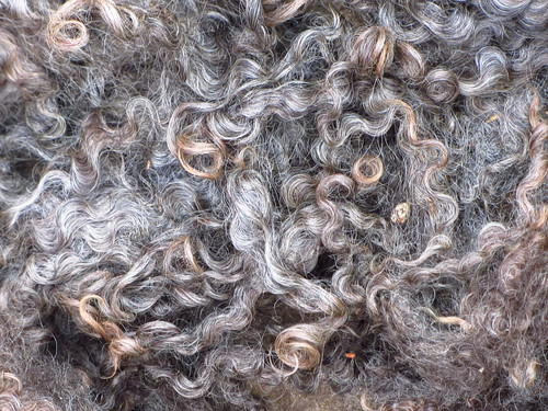 leicester longwool