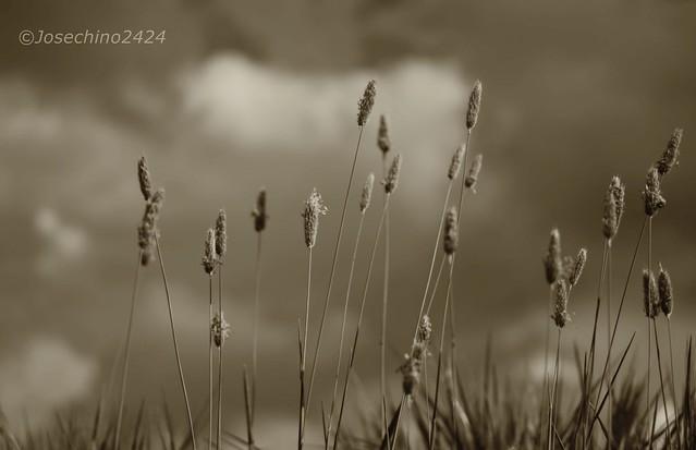 A merced del viento