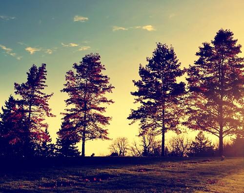[フリー画像素材] 自然風景, 樹木 ID:201112102200