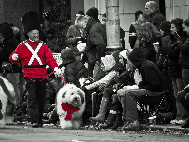 Old English Sheepdog (Seattle Macy's Parade 2011)
