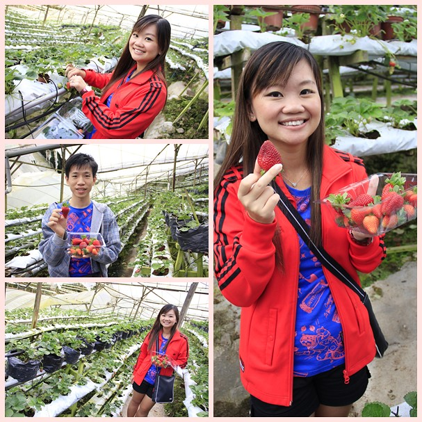 us at strawberry farm