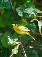 flower(0.0), animal(1.0), eurasian golden oriole(1.0), fauna(1.0), finch(1.0), beak(1.0), bird(1.0),