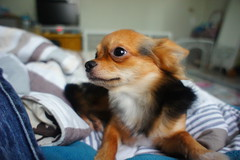 Happy Tails | Pet Grooming | 10023 | New York | 2