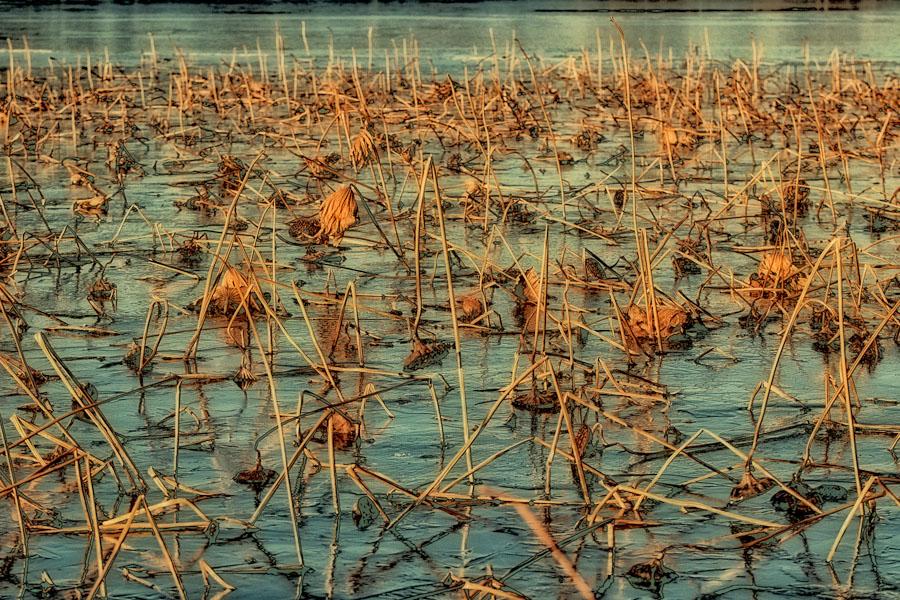 Sunlit Ice on Pond
