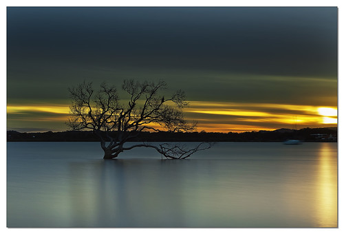 longexposure sunset orange tree bird water silhouette reflections dark evening lone bayside mangroves hitech mozzies