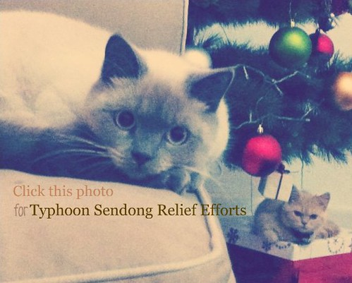 Winello's dreamy eyes. Perdita likes that gift box under the Christmas tree