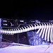 Whale skeleton ice sculpture