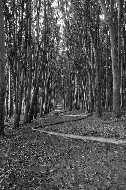 WoodLine in B&W