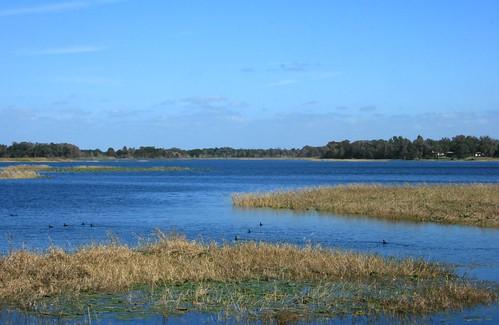 lake florida waterfowl hernando waterscape citruscounty