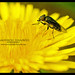 Savannah Photography  - Fotografer Yogyakarta Indonesia 