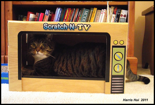 Greetings To Your Loved Pets From Puss Tabby on TV S1536e