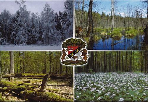Belovezhskaya Pushcha / Białowieża Forest