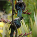 A Pair of Tui
