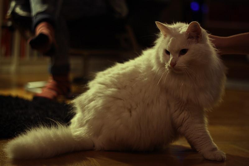fin katt