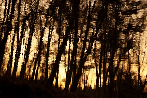 trees sunset reflection water silhouette sepia river flow ripple nashua