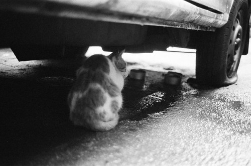 Cat under the car