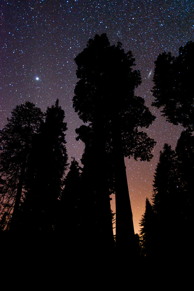 Andromeda and Jupiter above the Giant Sequoias