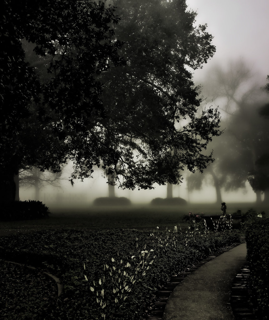 foggy morning at Ormond Plantation