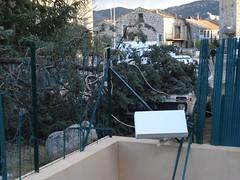 Les dégâts dans le jardin des voisins et la chute de l'arbre