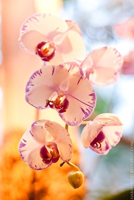 Потрясающие фотографии с выставки орхидей