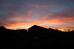 Surrey Sunrise