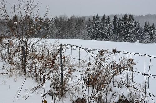 winter ski_267