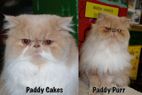 Paddy Cakes & Paddy Purr