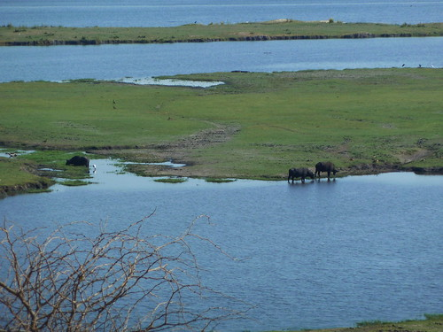 The animals of Chobe