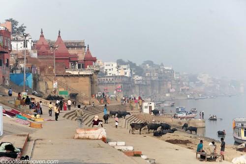 Cows, boats, laundry, smoke, river.