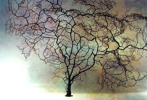 Illustrazione per un Manuale di botanica immaginaria by leowincy