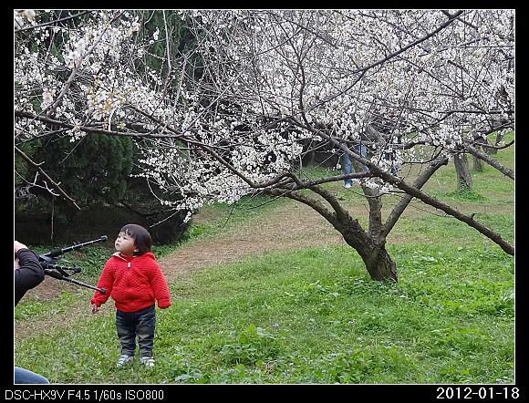 20120118F1清大梅園看梅花