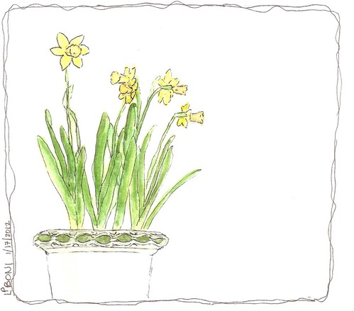 WC sketch Daffodils