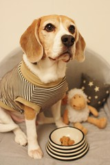 Monotone Stripes by Kaiser the Beagle