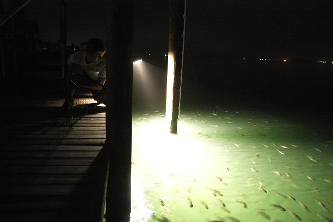 dock11