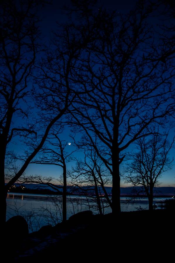 Nightsky Silhouettes